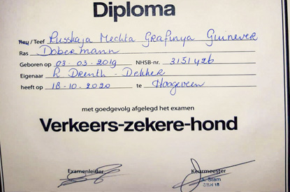 dobermann RM op VZH Hoogeveen